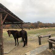 牛や馬と戯れることができます。