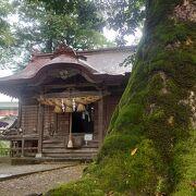 苔生した木に和傘とぼんぼり