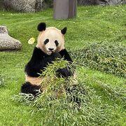 パンダの為に飛行機で東京から来る方も多いです。