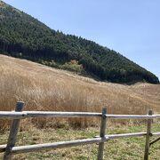 仙石原すすき草原の遊歩道が整備されていた
