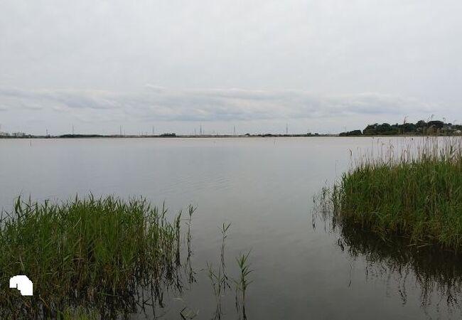 沼の周辺を散策することもできます
