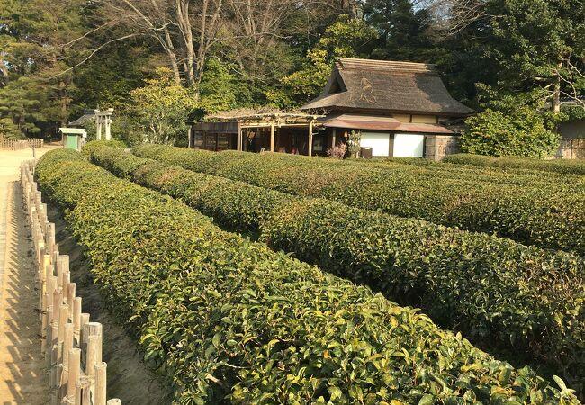 茶畑 (岡山後楽園)