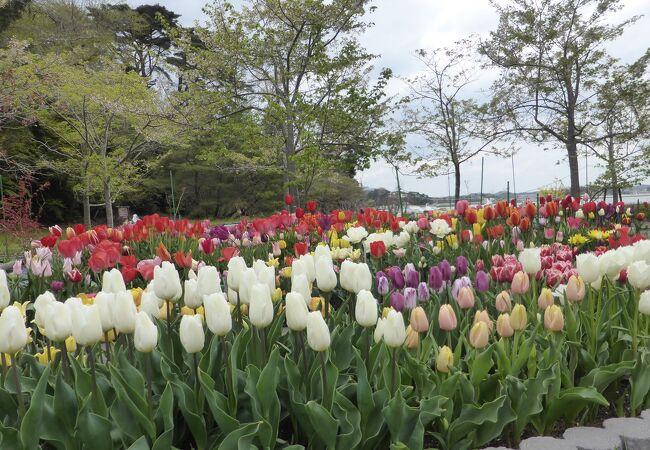 福浦島自然植物公園
