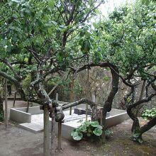 地福寺島崎藤村夫婦の墓