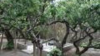 地福寺 島崎藤村の墓