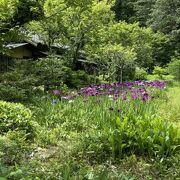 多種類の花が楽しめる6月