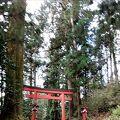 美しい杉並木
