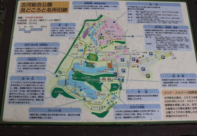 古河総合公園