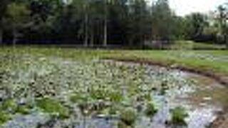 フレッカー植物園&センテナリーレイクス