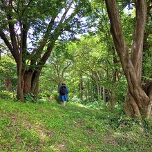 六国見山森林公園