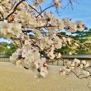 趣ある枝垂れ桜