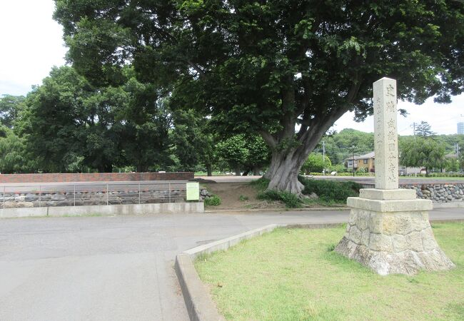 整地された広々とした公園のようです