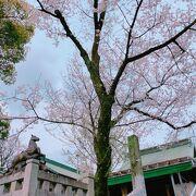 境内の桜と、駆け抜ける馬の銅像がカッコイイ!
