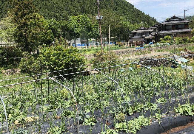 大原 (京都市)