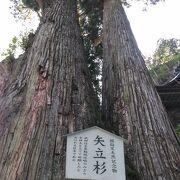 樹齢600年だそうです。