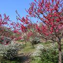 旧藤田邸庭園
