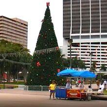 広場に飾られていたクリスマスツリー