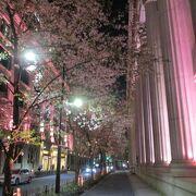 夜はライトアップされていました(桜)
