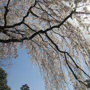 京都市の中心にあって静謐な雰囲気の広大な公園