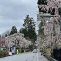 桜がとてもきれいでした。