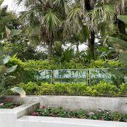さまざまな植物が生い茂る