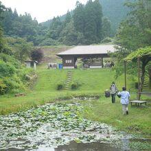 古代の森の奥の方、蓮の池の先に休憩所が見えます