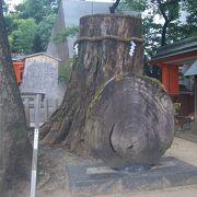 生田神社の神木