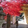 鮮やかな紅葉が出迎えてくれました