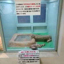 熱帯園最長寿のアメリカドクトカゲ