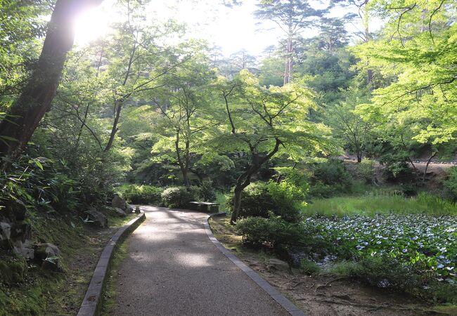 弥彦公園 (もみじ谷)