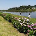 広い芝生の公園