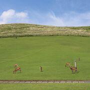 広々した芝生