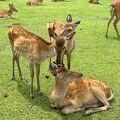 鹿がいっぱい