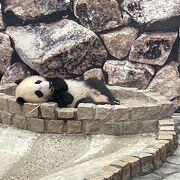 パンダが可愛い❤︎