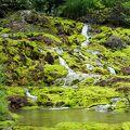 梅雨明けはグリーンがひときわ鮮やかでした。