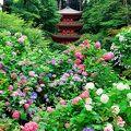 近くの、浄瑠璃寺とセットで参拝しました。 あじさいがキレイでした!