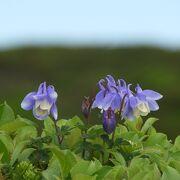 花の山:八甲田。