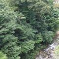 木々に囲まれた川沿いの巨大露天風呂が圧巻