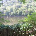 木戸池まで歩きました