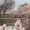 桜の名所です。