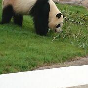 パンダも可愛いですがサファリワールドも楽しい