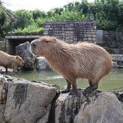 動物とサボテンを楽しめる公園