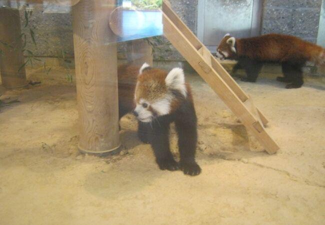 西山動物園