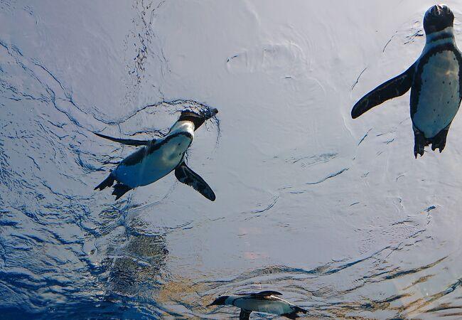 ペンギンをゆっくりと見ることができて大変面白かった