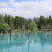 夏の青い池は観光客で賑わいます
