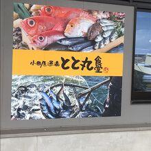 小田原漁港 とと丸食堂