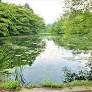 池も水面にも眩しい深緑が,,雲場池