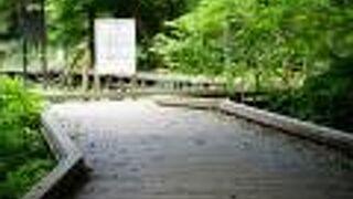 東高根森林公園