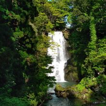 奈曽の白滝