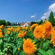 季節ごとに、色々な花畑を楽しめます! ドイツの田舎を訪れた気分を味わえてGood!